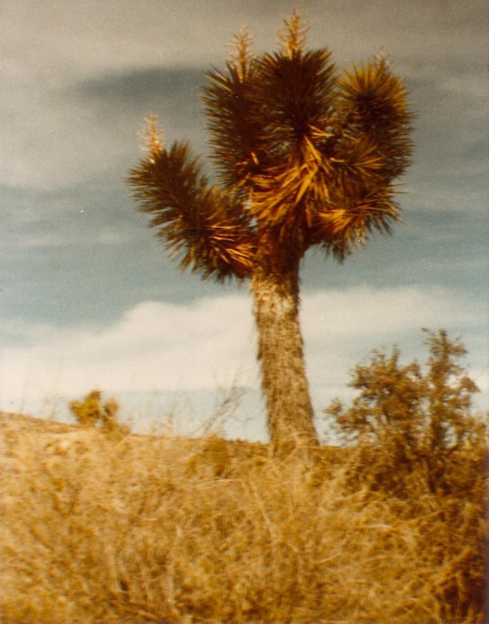 002-1950-j-tree.jpg