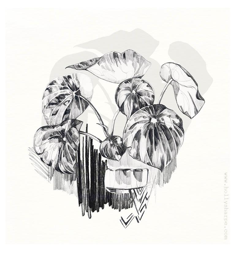 Pencil botanical illustration by Holly Sharpe