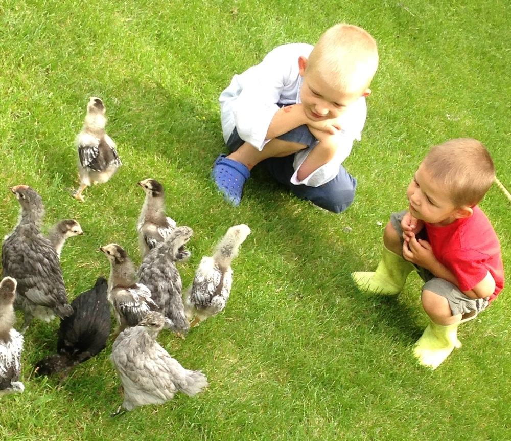 flock of dinos.jpg