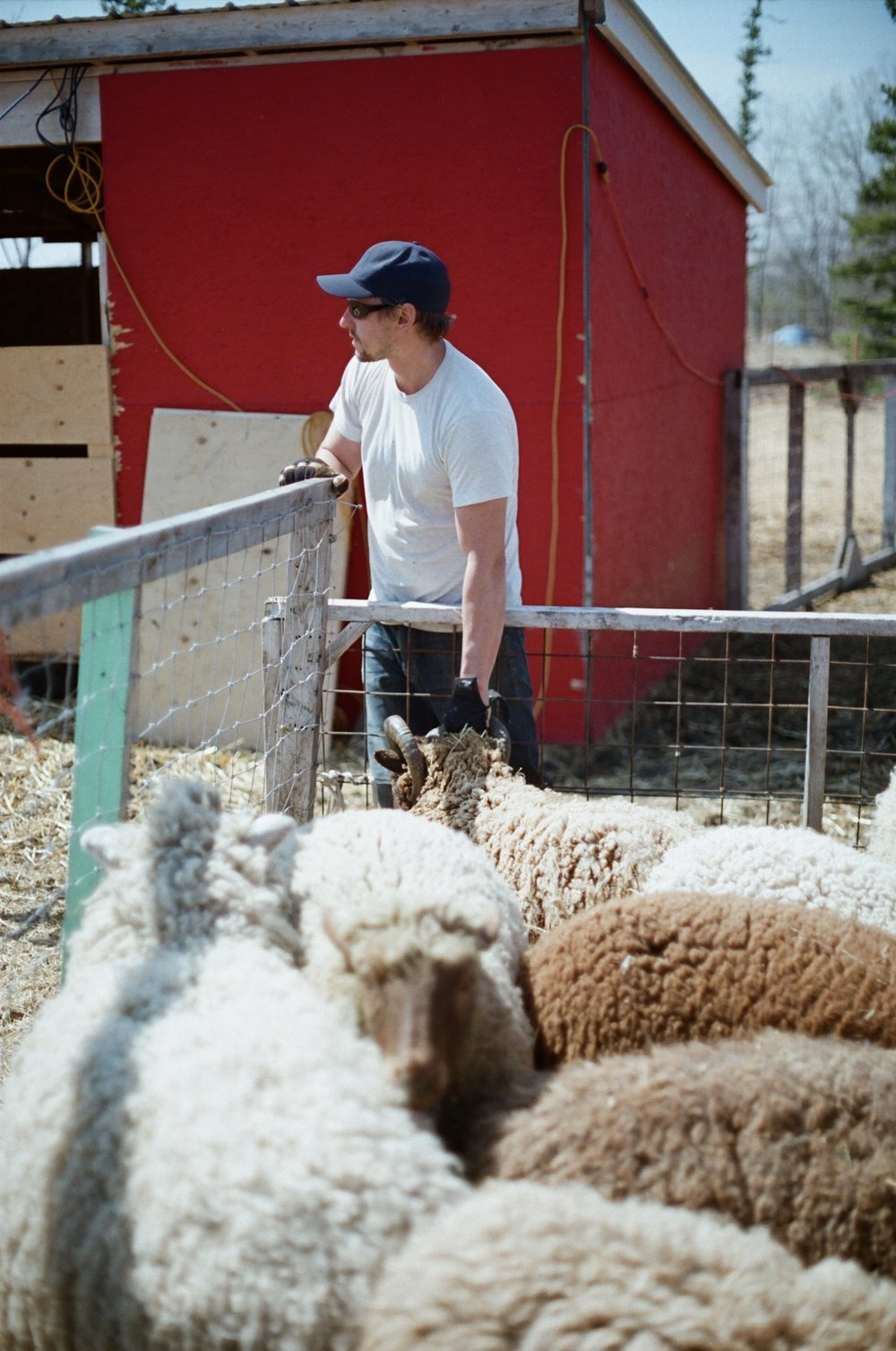 Luke our sheep wrangler for the day                                                   (Photo by Mackenzie Smith)