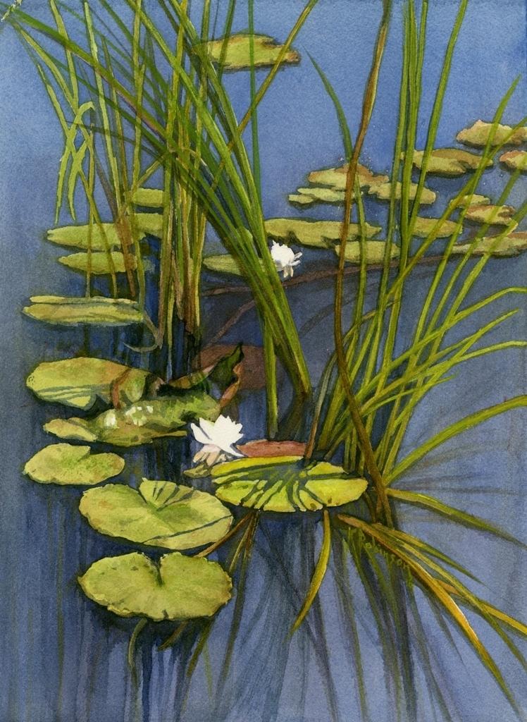 Bjornemyr Pond Waterlilies