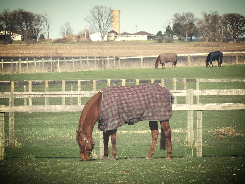 horse-rug-everbold.jpg