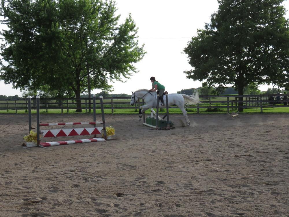 jumping-horse-marianna.JPG