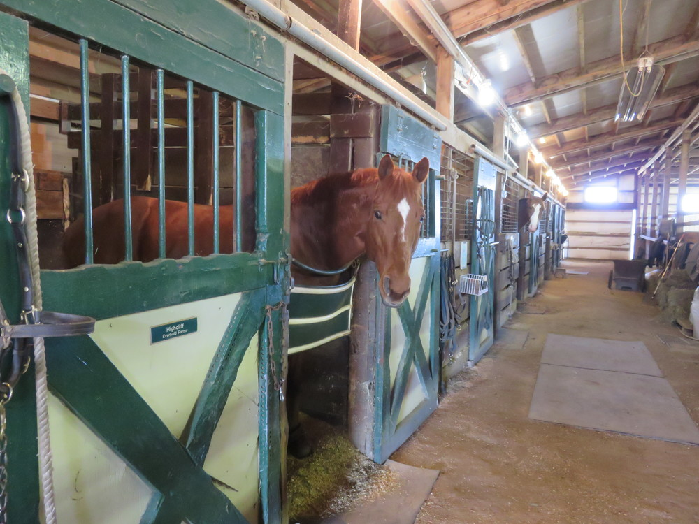 Offering some of the largest turnout in the region, Everbold is a fully equipped boarding facility and riding center.  Learn more about Boarding...