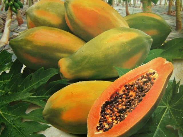 Papaya Formosa.jpg