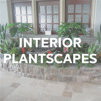 interiorplantscapes.png