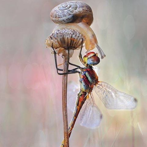 It's so beautiful to make connections with people I wouldn't normally have the chance to connect with. Thanks to the global reach of social media I have met some of the most helpful people! Thank you so much for coming on this journey with me. #nail_snail_baby #connection #makingfriends #cutesnail #dragonfly #socialmedia #itsalongwaytothetop #thankyou