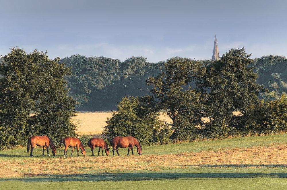 'Pleasant pastures'