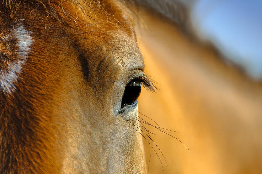 Horse whispering..