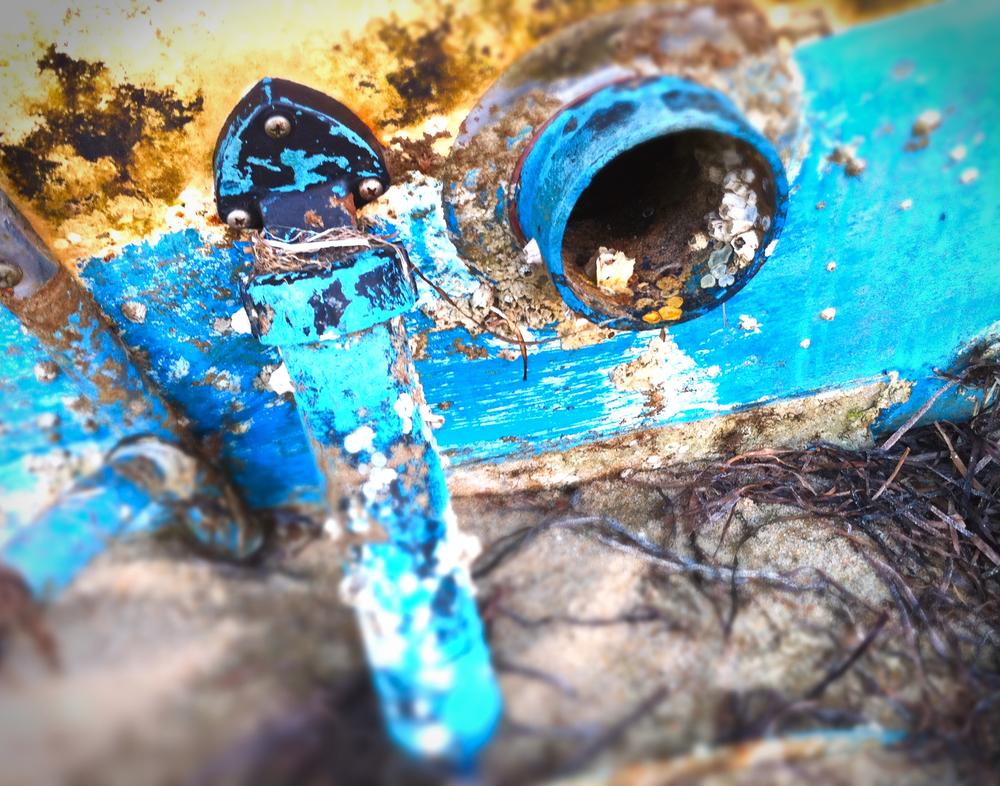 Blue Barnacle