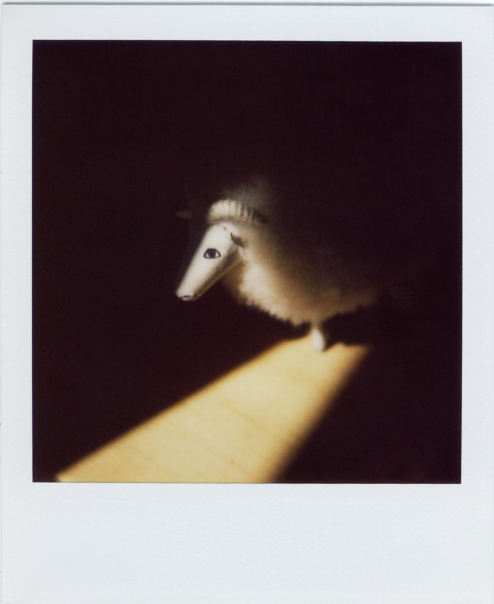 polaroid rammy.jpg