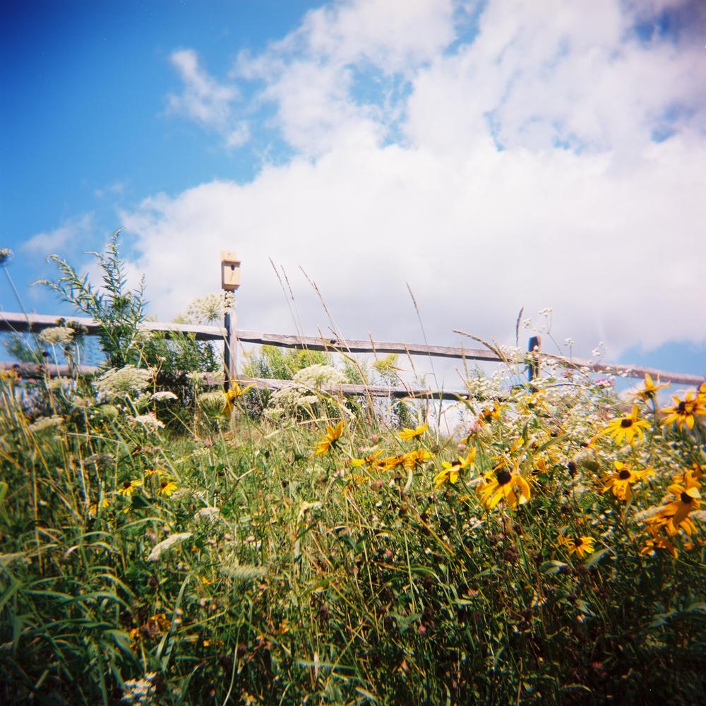 Vermont birdhouse.jpg