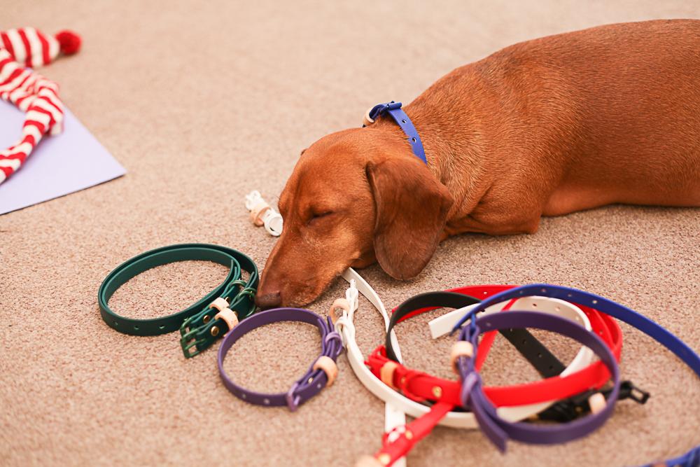 Dog model life