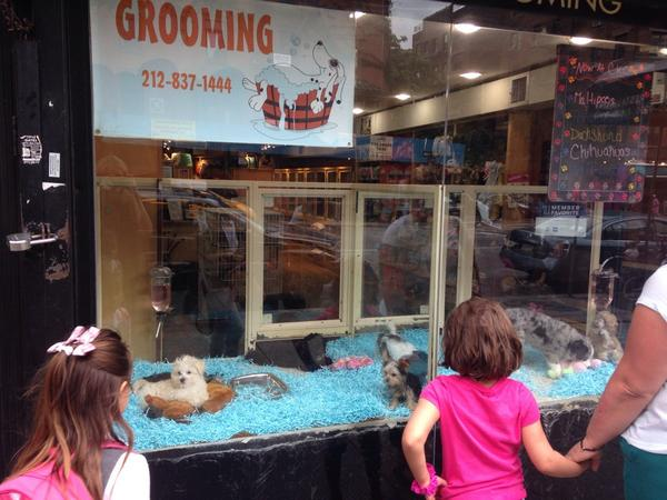 The image I took in New York 4 years ago. It annoys me that the little girls looking in the window will grow up thinking this is ok.