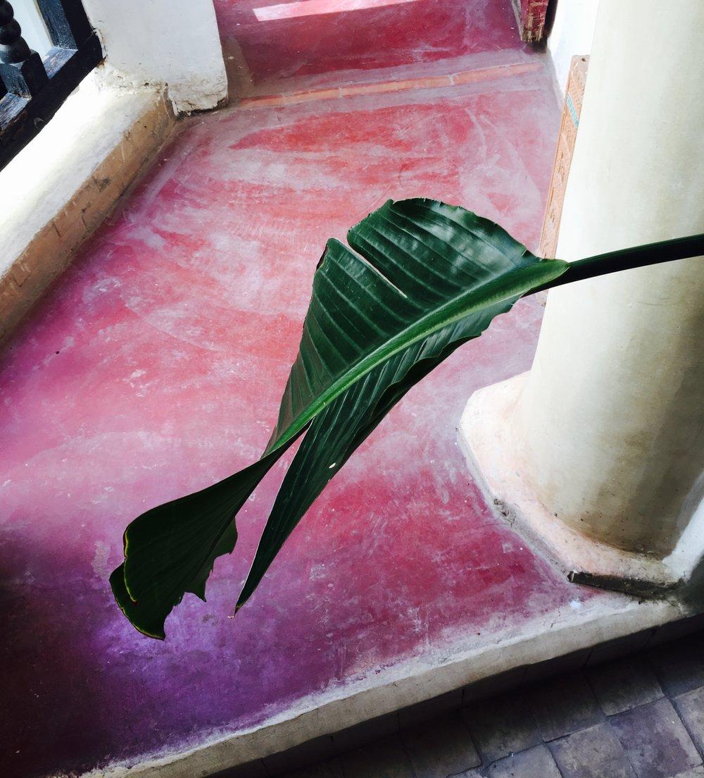 Plant in Riad.