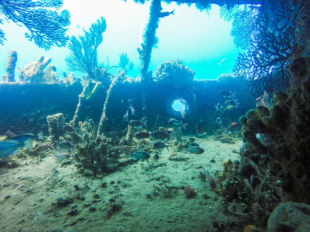 Fish In Wreck - Leseen M Wreck, St. Lucia 25/01/2016