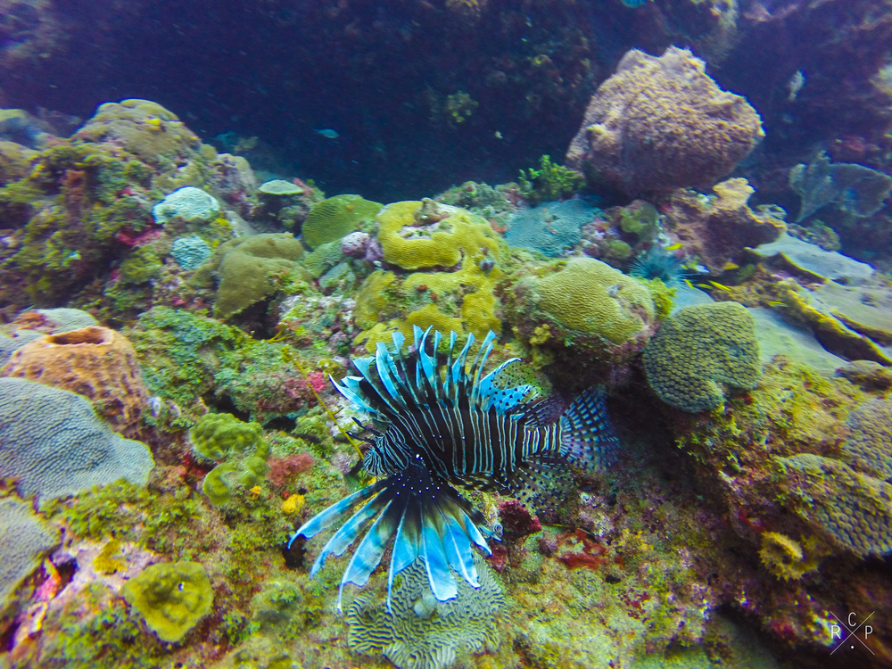 Lion Fish - Young Island, St. Vincent & The Grenadines 08/02/2016