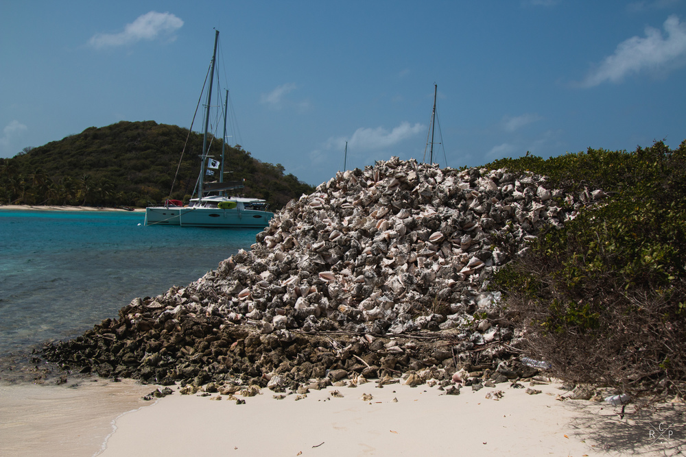 Conch Shells 1 - Tobago Cays, St. Vincent & The Grenadines 13/02/2016