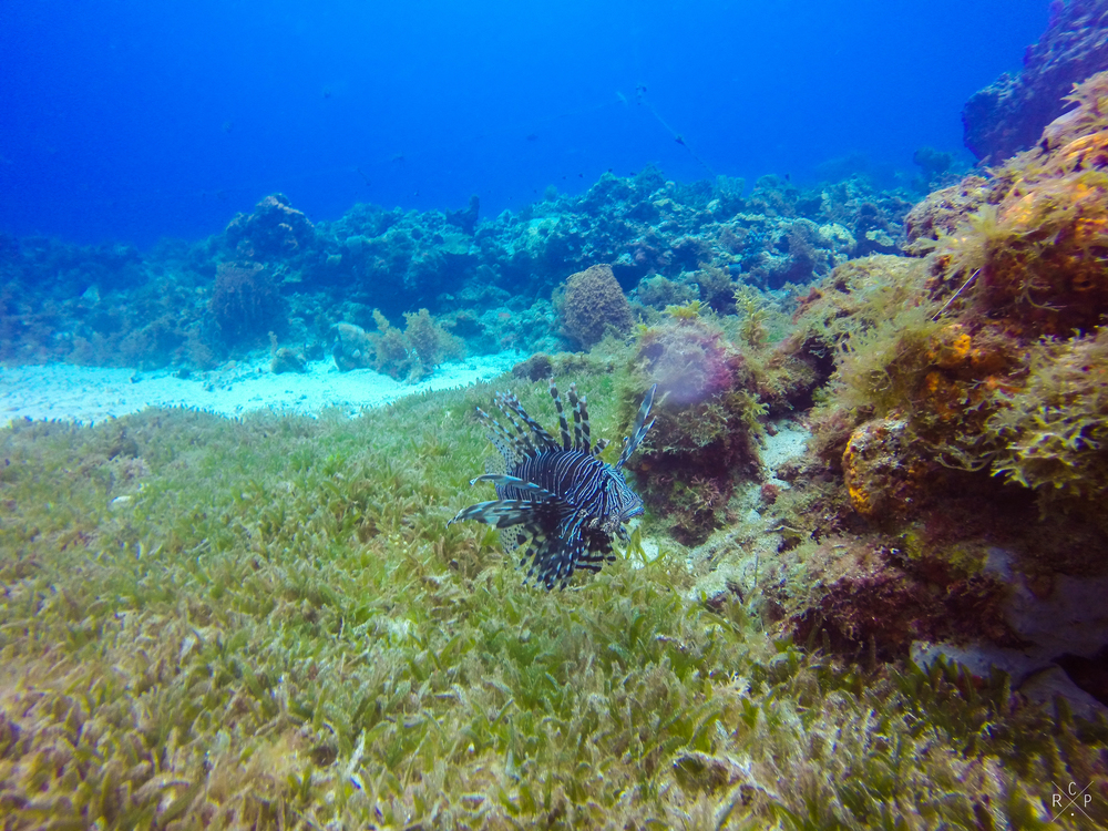 Lionfish 1 - Anse D'Arlet, Martinique 01/03/2016