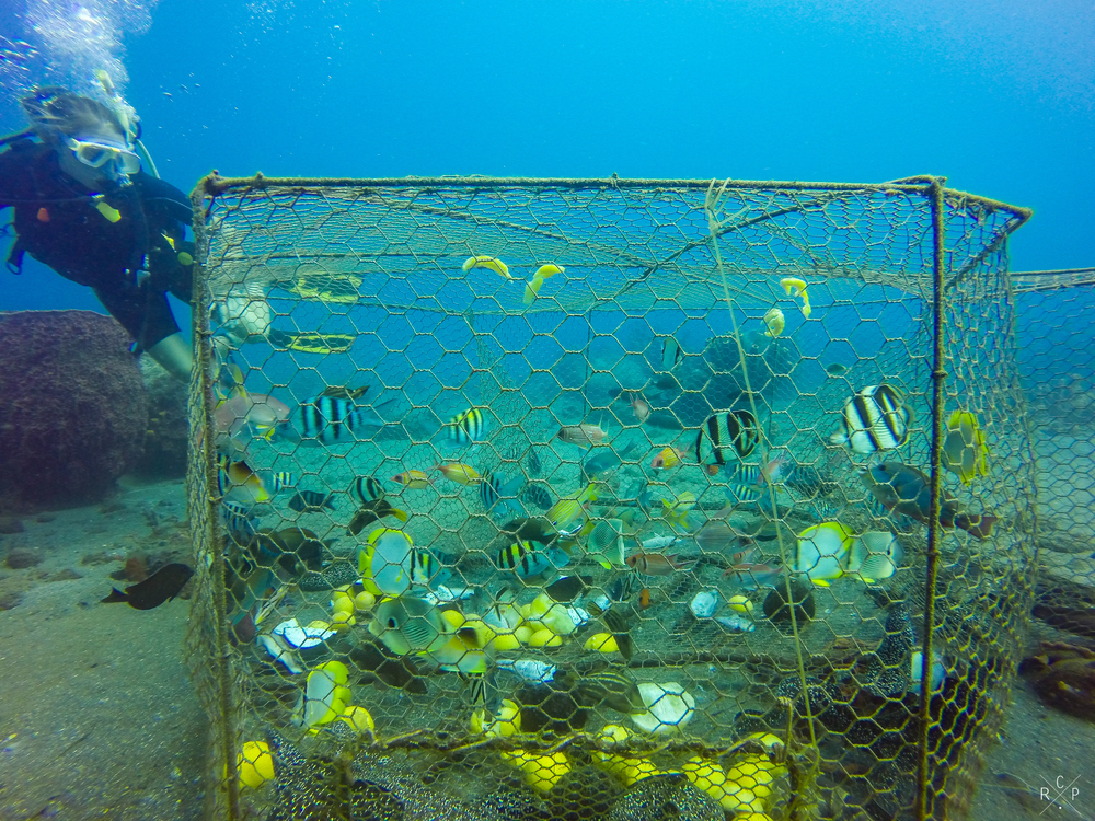 Fish In Cage - Saint Pierre, Martinique 05/03/2016