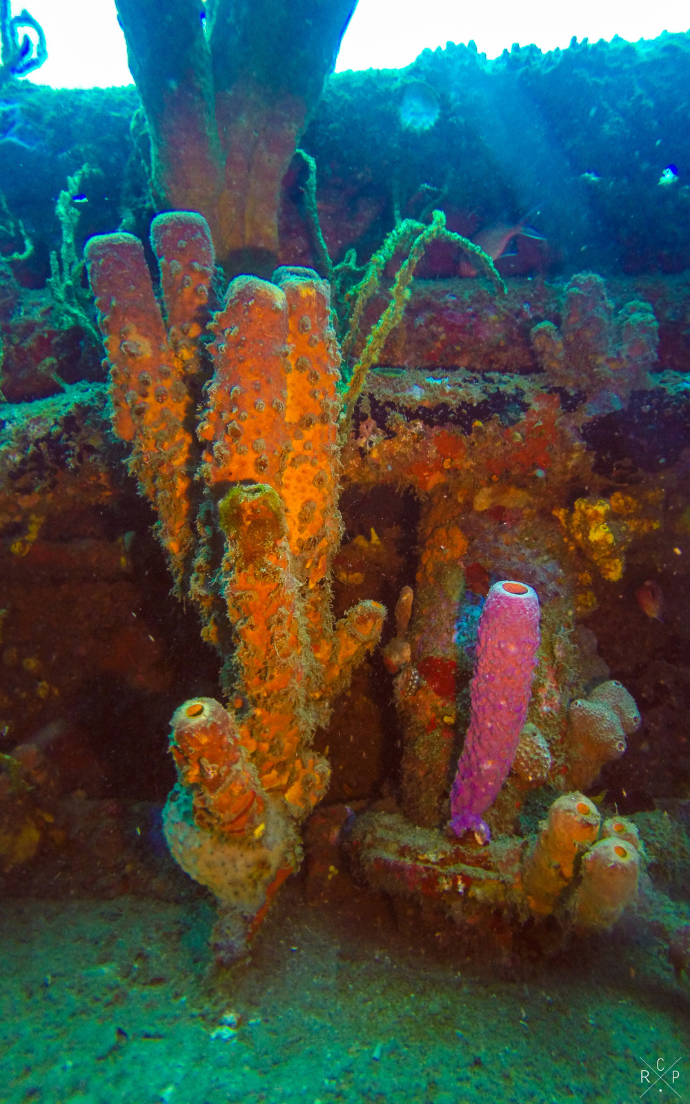 Tube Sponges - Fran Jack Wreck, Jacque Cousteau Underwater Reserve, Guadeloupe 10/04/2016