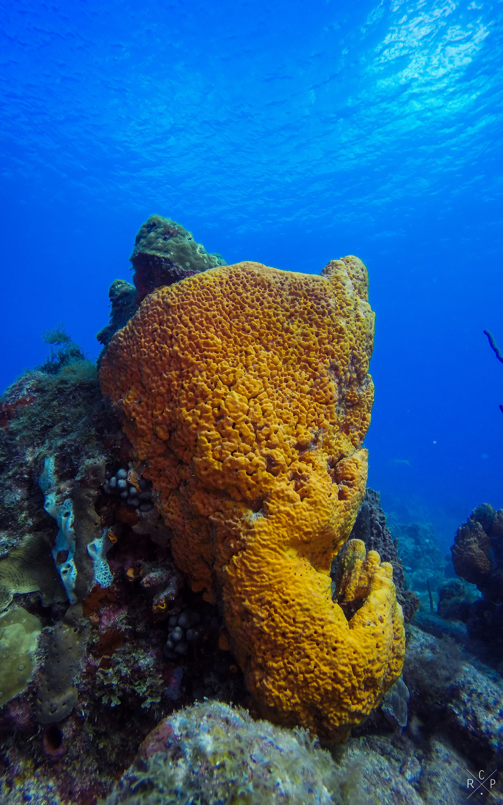 Orange Coral - La Piscine, Jacque Cousteau Underwater Reserve, Guadeloupe 11/04/2016