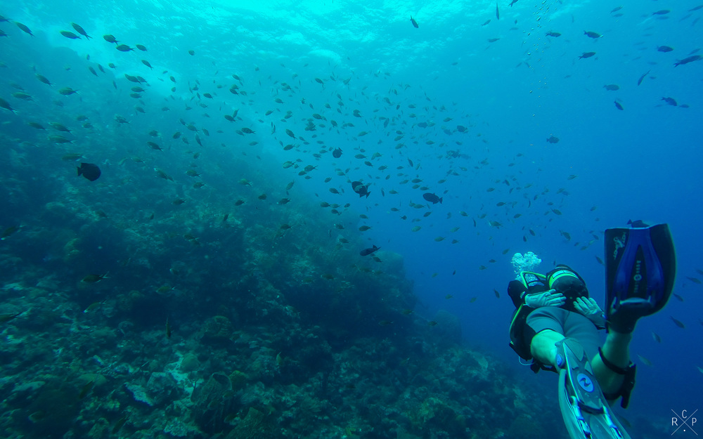 Swimming With The Fishes - Tombant aux Carangues, Jacque Cousteau Underwater Reserve, Guadeloupe 12/04/2016