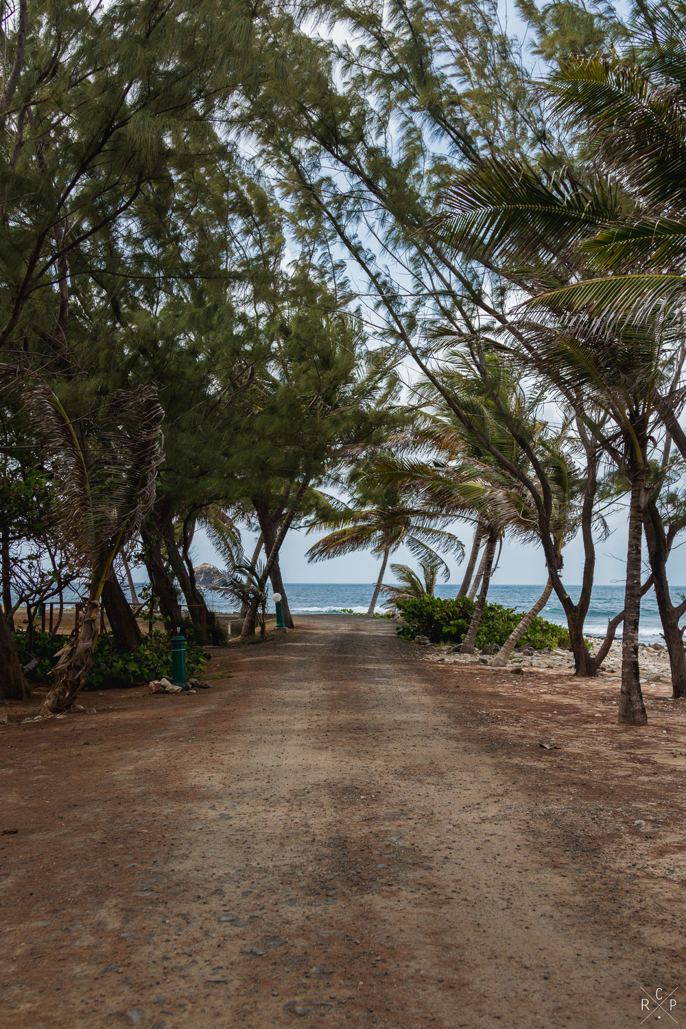 Palm Lined Path - Pigeon Island, Saint Lucia 29/03/2016