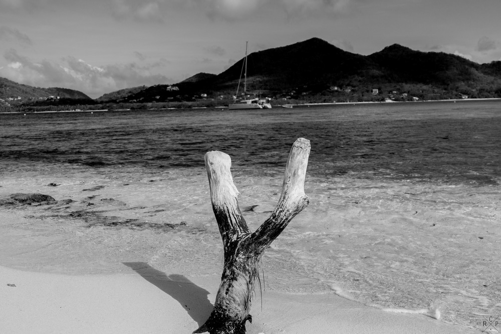Y - Sandy Island, Carriacou, Grenada 11/05/2016