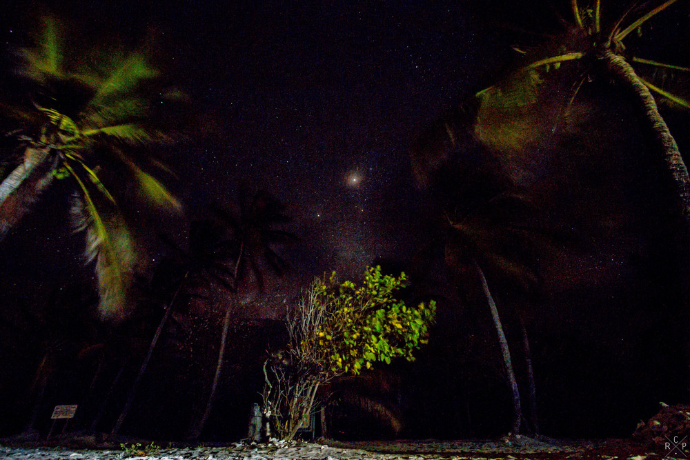 Glowing Trees - Tobago Cays, St. Vincent & The Grenadines 08/05/2016