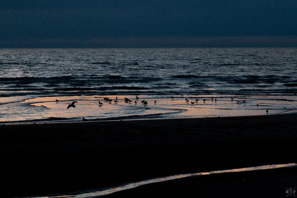 Gulls - Blackpool, Lancashire, England 30/08/2016