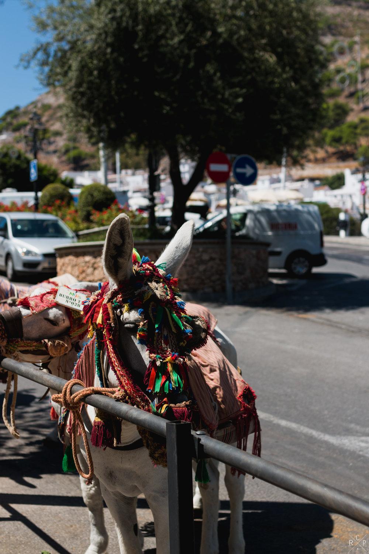 Donkey - Mijas, Spain 04/09/2017