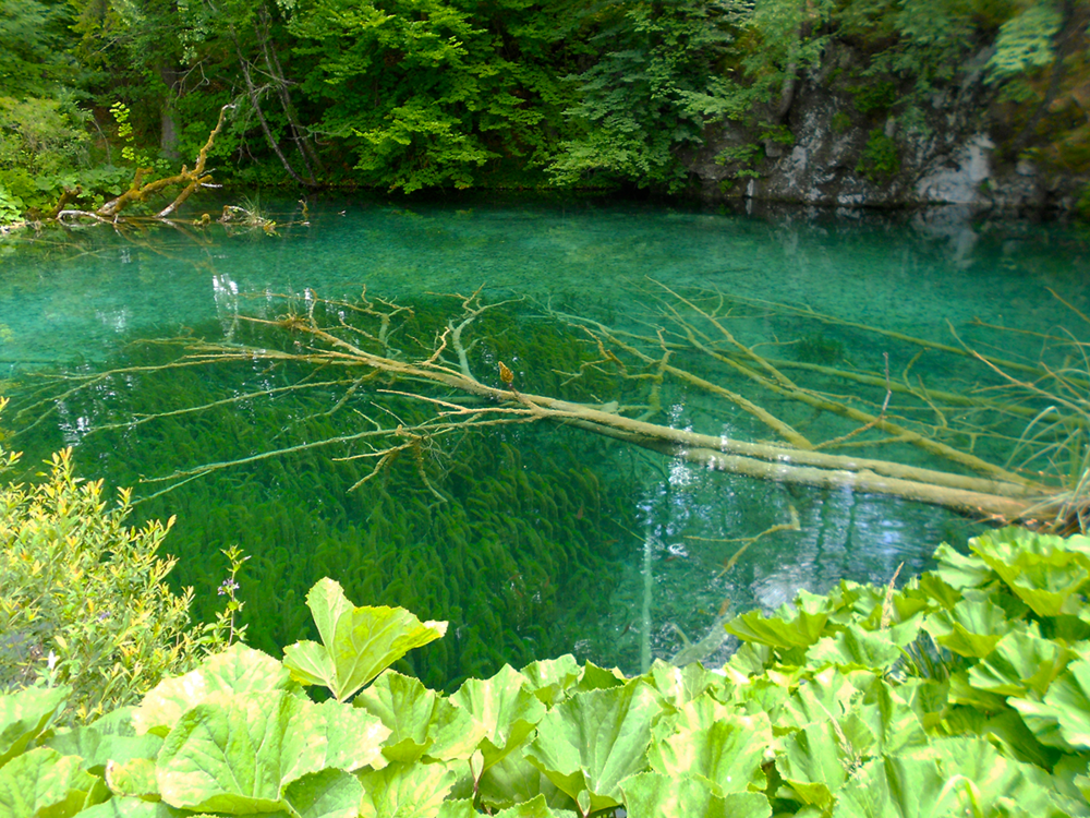Plitvice Lakes National Parks Croatia clear water.png