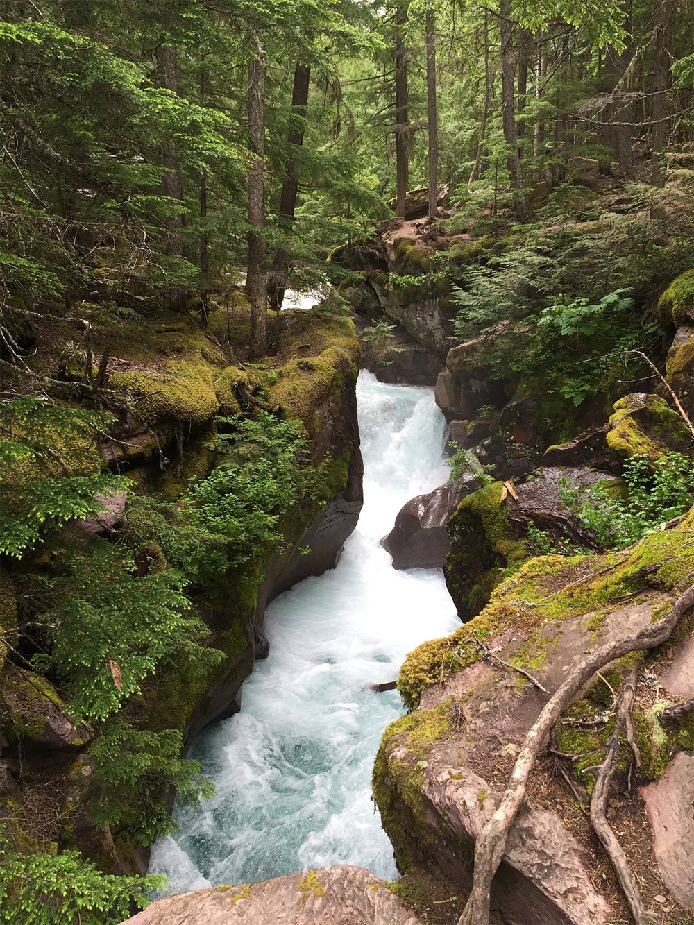 Glacier National Park Avalanch Hike river.JPG