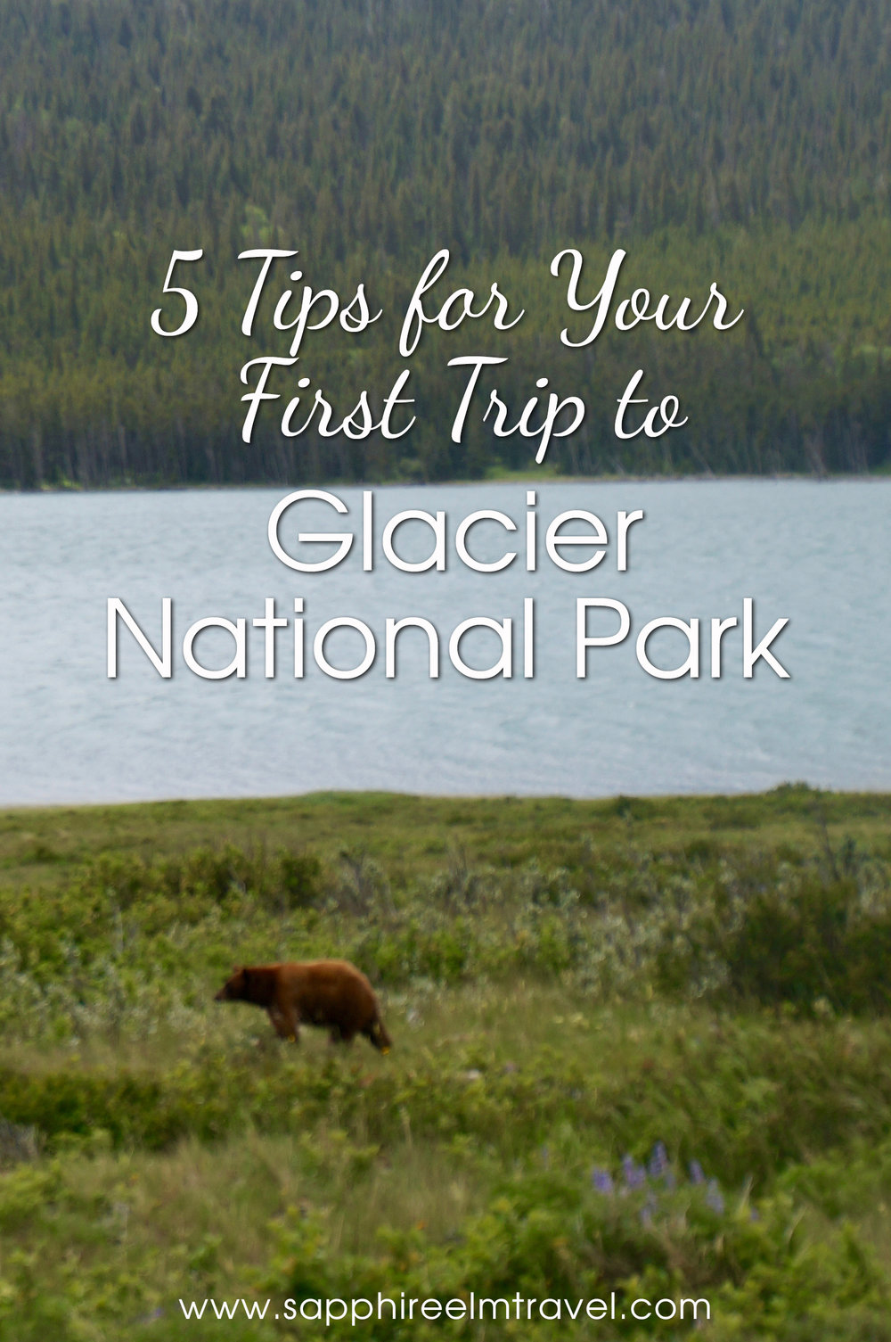 Glacier National Park tips bear