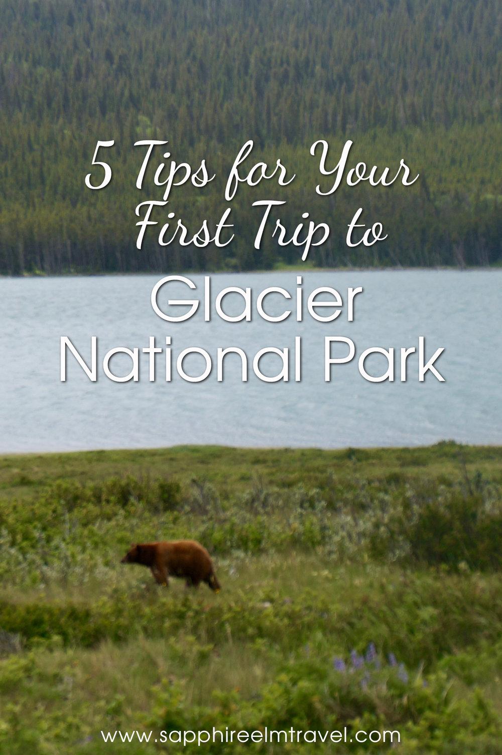 Glacier National Park tips bear