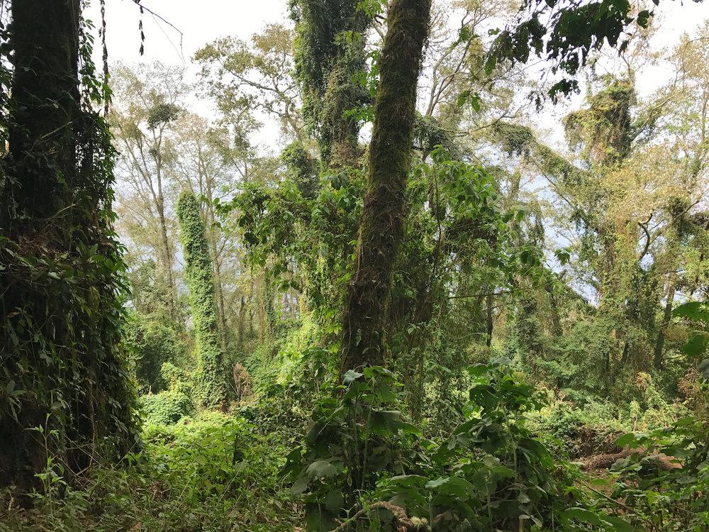 Volcano San Pedro hike | Lake Atitlan, Guatemala
