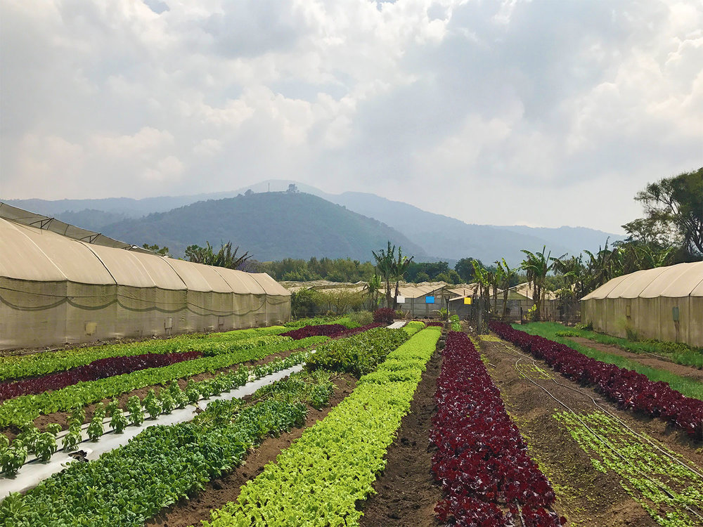 Caoba Farms in Antigua, Guatemala