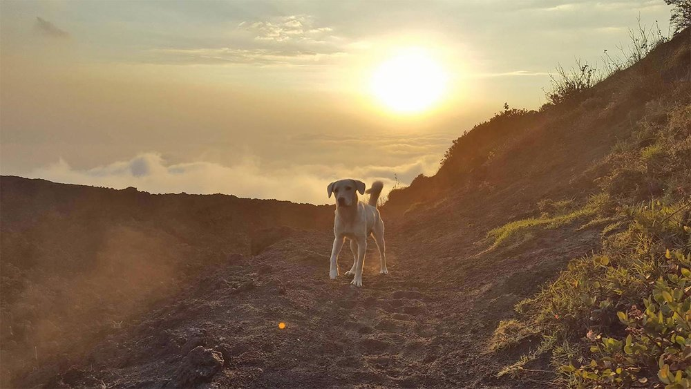 dog at sunset on Pacaya Volcano in Antigua, Guatemala