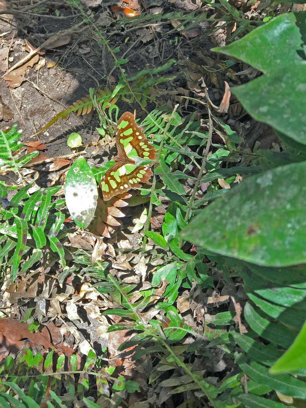 butterfly while hiking Concepcion volcano on Ometepe | Best Volcano Hikes in Nicaragua
