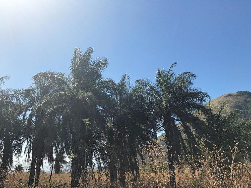 Nicaragua-volcano-hike-El-Hoyo-overnight-full-moon-volcano-hike-palm-trees.jpg