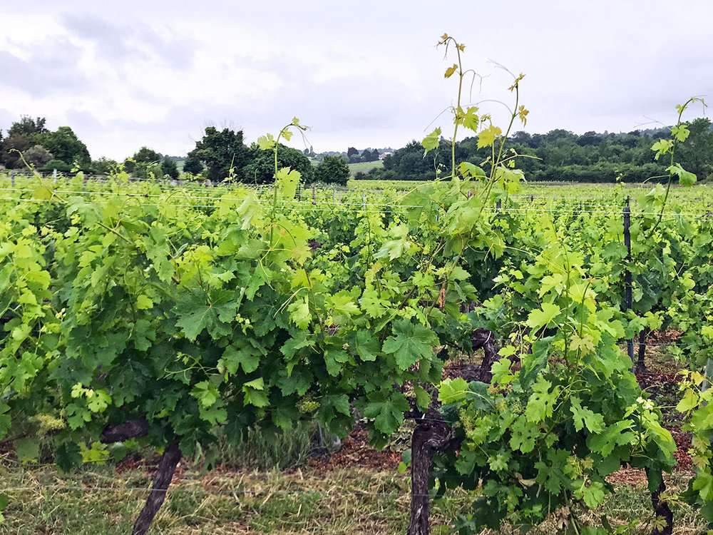 Bordeaux-vineyards.jpg