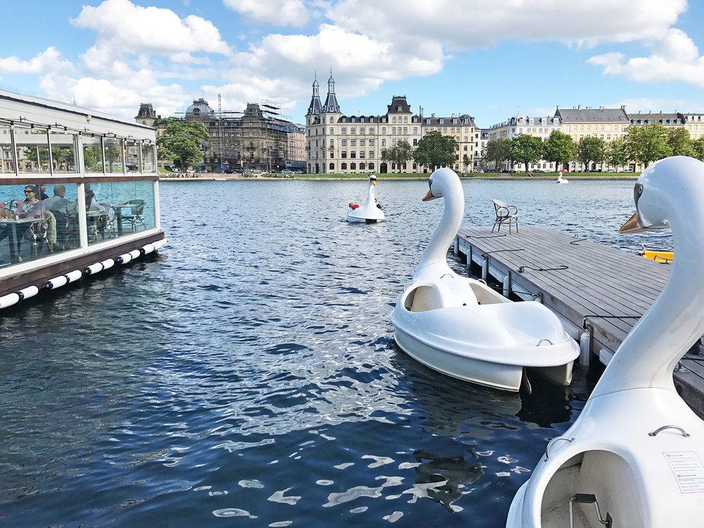 Dronning-Louises-bridge-swan-boats-Copenhagen.jpg