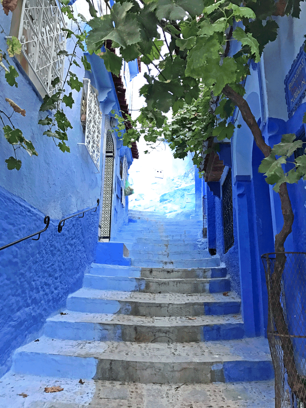 Chefchaouen-Morocco-image-blue-stairs-tree.png