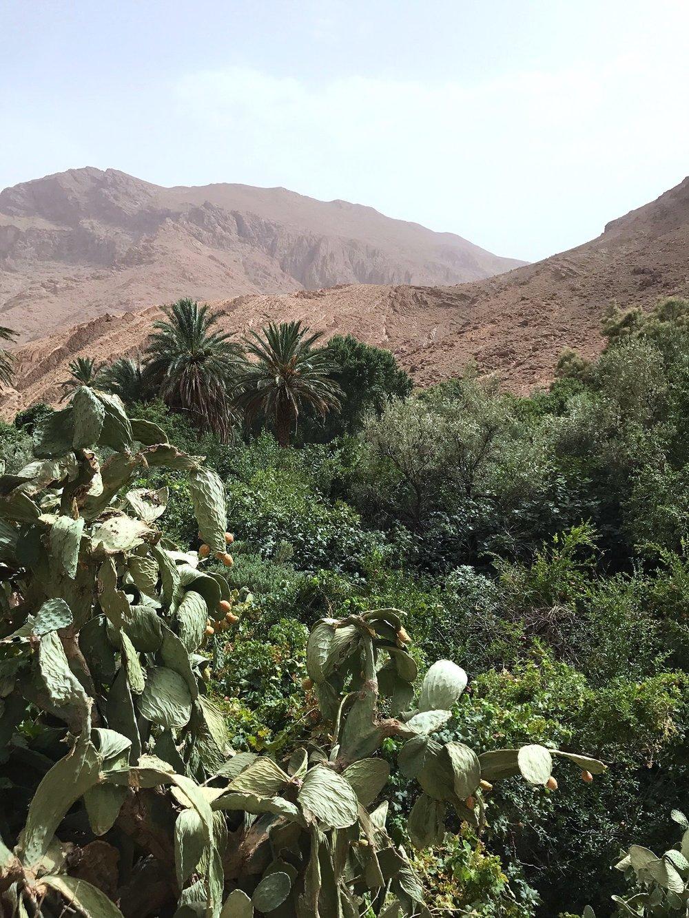 Todgra-Gorge-Morocco-canyon-hike-cactus.jpg
