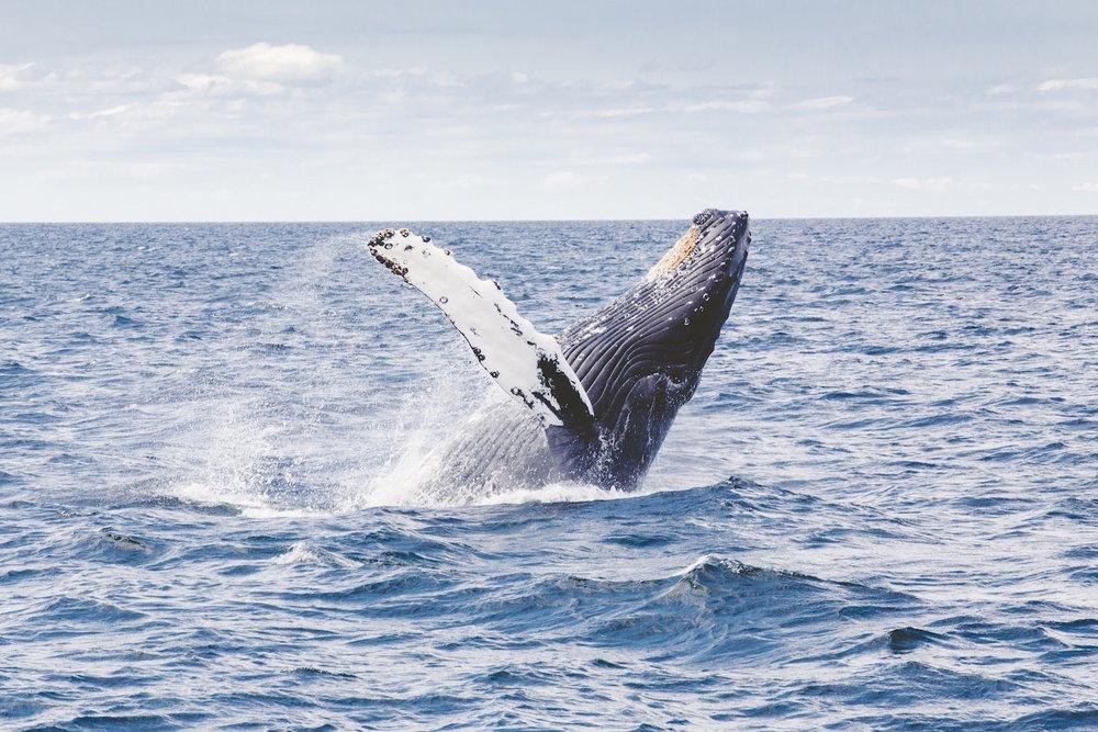 whale big sur wildlife