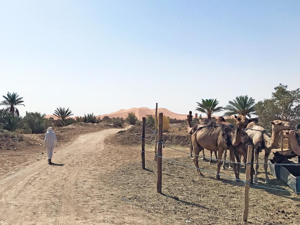 Sahara Desert Morocco Merzouga