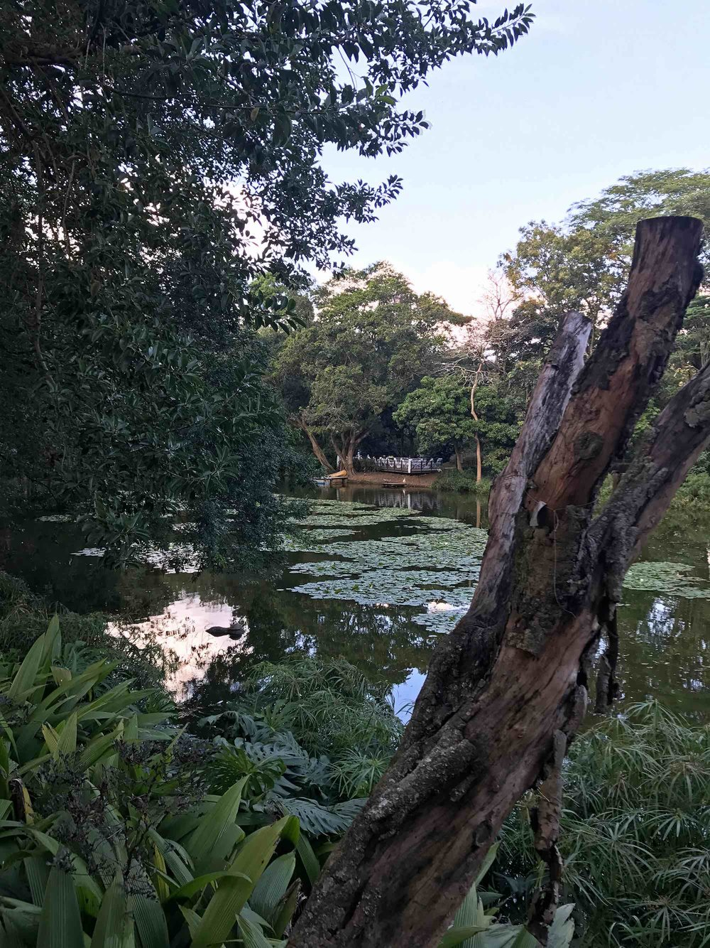Medellin Colombia Botanical Garden