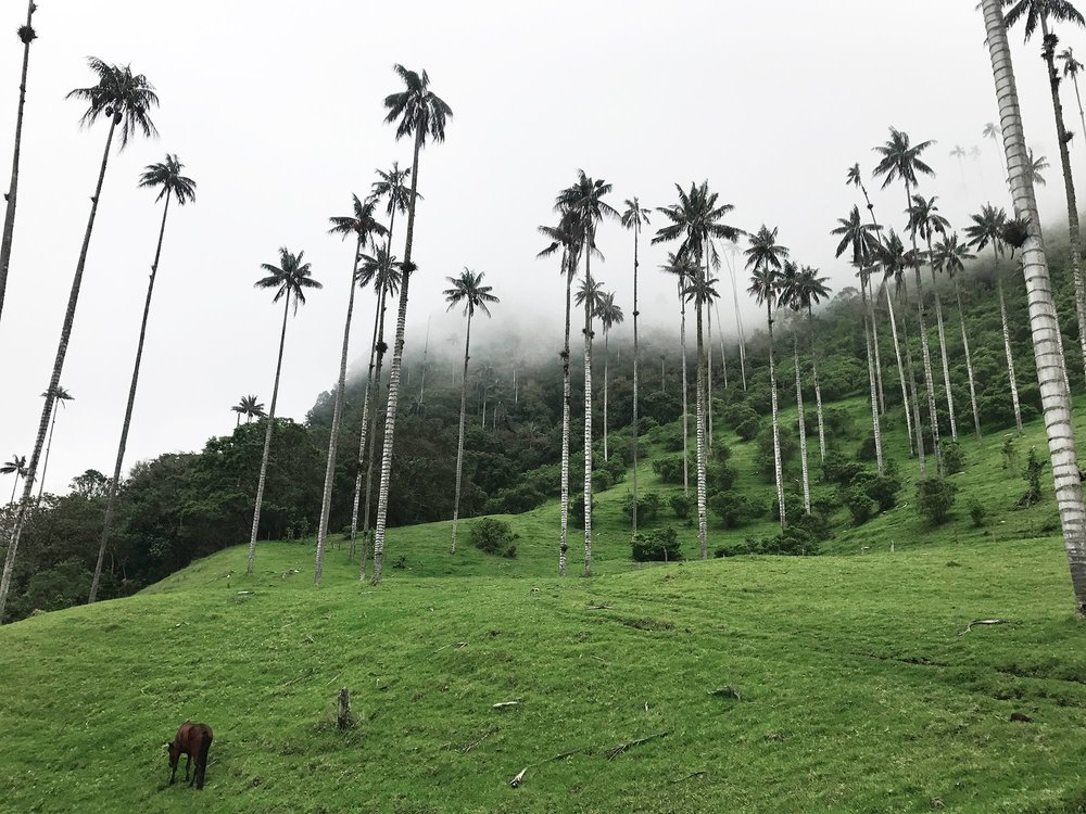 Hiking Cocora Valley, Colombia