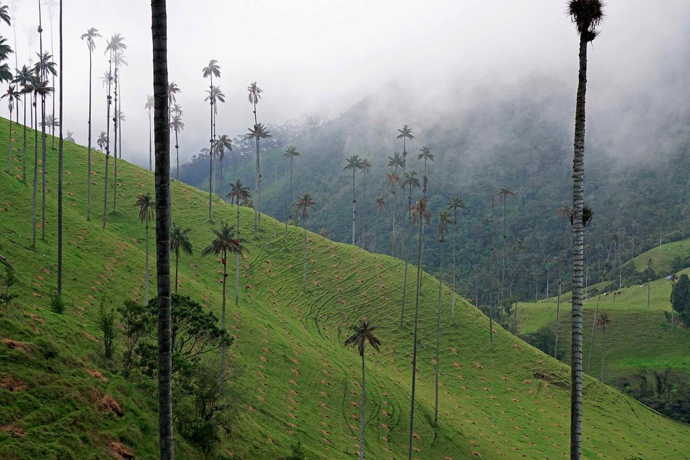 Hiking Cocora Valley, Salento, Colombia